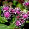 Masks with burdock oil